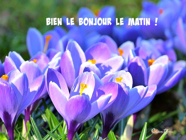 Bonjour Le Matin